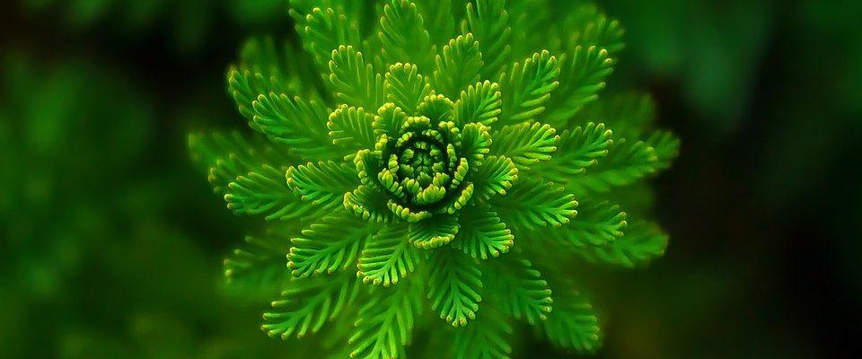 Zelené květiny pro každou domácnost