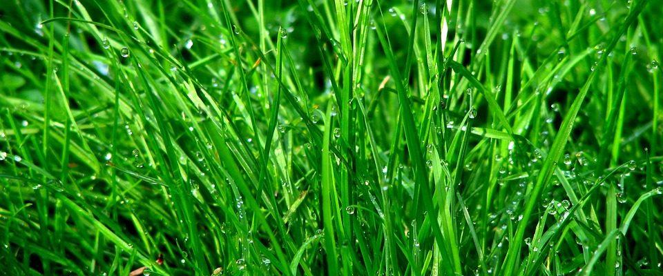 Proč si šlapat po trávě