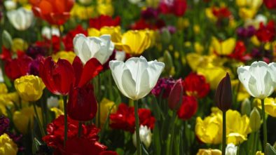 květnové květiny