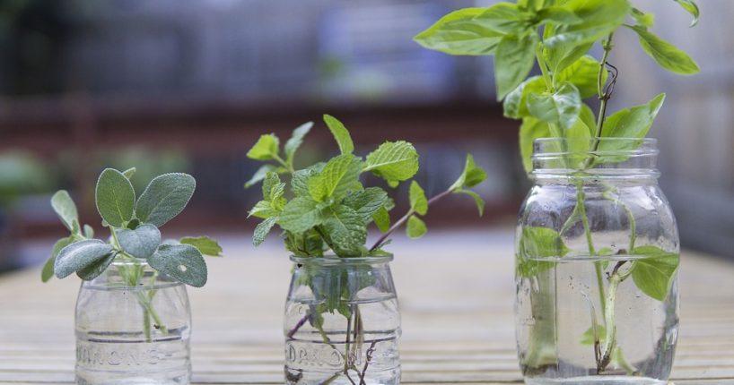 Jaké bylinky pomáhají na onemocnění slinivky?