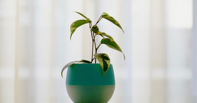 Jak netradičně pěstovat pokojové rostliny