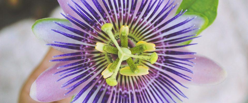 Pěstujte popínavé pokojové rostliny. Poradí si s nimi i nezkušení pěstitelé