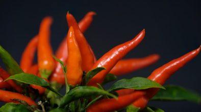 Jak na pěstování chilli papriček