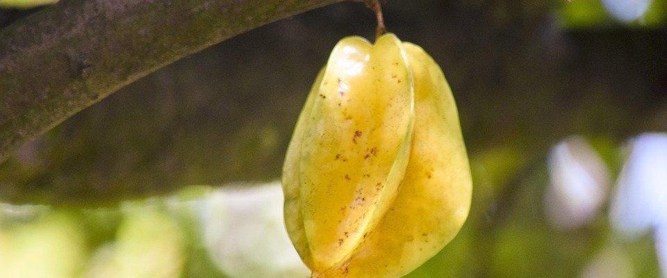 Jak na pěstování exotické karamboly