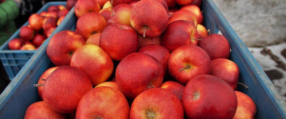 Tipy a rady, jak skladovat ovoce a zeleninu ve sklepě